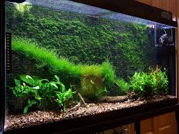 cool thing to do with java moss aquascape eden pinterest