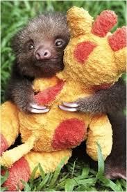 baby sloth holding stuffed giraffe imgur