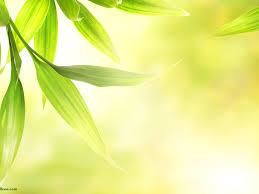 soft green fresh green fresh soft green leaves 1600x1200 download