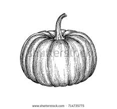 ink sketch pumpkin isolated on white stock vector 714735757