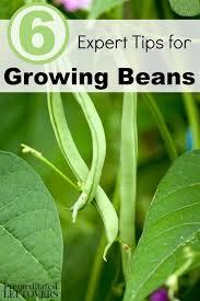 433 best green thumb images on pinterest gardening veggie
