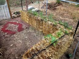 a water saving veggie garden for the foothills sierra foothill