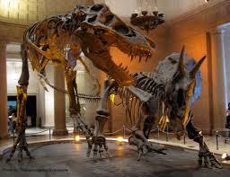 best 25 dinosaur exhibit ideas on science exhibition