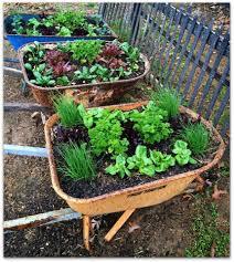 Vertical Veggie Garden Recycled Wheelbarrows Create Awesome Movable Raised Veggie Gardens