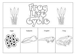frog life cycle worksheet for kindergarten google search