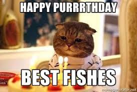 Funny Birthday Meme Generator - happy purrrthday best fishes birthday cat meme generator