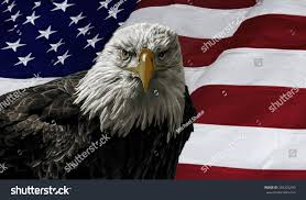 Painting A Flag Oil Painting Majestic Bald Eagle Against Stockillustration
