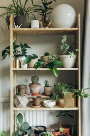houseplants in the home with nest co uk u2014 haarkon lifestyle and