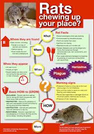 rat control manchester discreet call 0161 375 1283