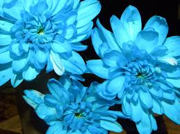 Images Of Pretty Flowers - blue flowers are pretty by makeastarlightwish on deviantart