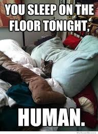 Sleeping Cat Meme - condescending cat weknowmemes