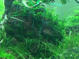 little red 2016 rescape 221103