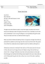 primaryleap co uk reading comprehension green sea turtle worksheet