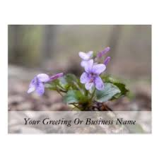 sweet violet gifts on zazzle