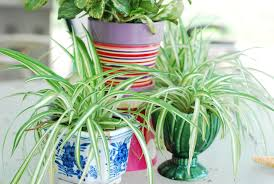 the best indoor plants and their benefits good matters blog