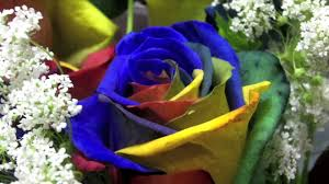 Blue Roses For Sale レインボーローズ Rainbow Roses Quick Japan No 15 Watch It In
