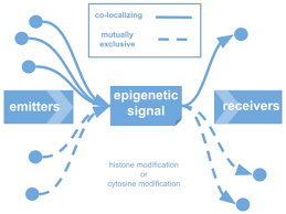 epigenomic co localization and co evolution reveal a key role for