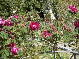 immagini di giardini fioriti il giardino fiorito foto di giardini botanici hanbury