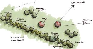 6 screening plants that aren t leyland cypress revolutionary gardens