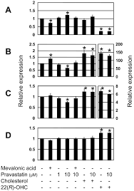 effects of pravastatin on the expression of atp binding cassette