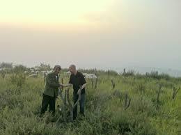 reforestation china 1 jpg