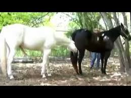 mustangs mating 26 best mating images on link and