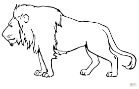 male lion coloring page free printable coloring pages