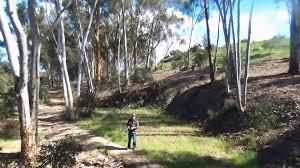 chollas park eucalyptus trees san diego california 2016
