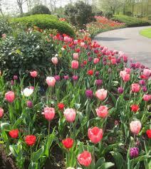 bedroom tulip landscaping ideas tulip planting ideas tulip