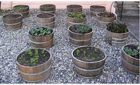 Half Barrel Planters by Thriving Wine Barrel Garden The Dirt At Plangarden Com
