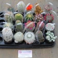 best 25 cactus ideas on indoor plants