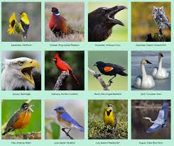 Iowa birds images Here 39 s the line up for iowa bird of mouth jennifer l knox