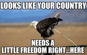 Freedom Eagle Meme - th id oip ouq t2bjj82grdqy8 jcqhaet