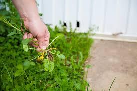 top 10 best charlotte nc lawn treatment services angie u0027s list