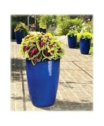 large outdoor flower pots cheap outdoor plants large outdoor plant