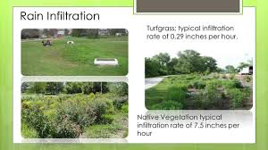 landscape design with native plants ecosystem services and