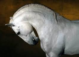 hairstyles for horses beauty will save viola beauty in everything