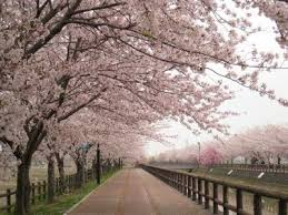 Flowers In Japanese Culture - hanami はなみ japanese language blog