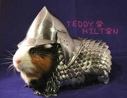 Shaved Guinea Pig Meme - guinea pig news and photos perez hilton