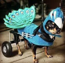 Chihuahua Halloween Costume 25 Pet Halloween Costumes Cute U0027t Huffpost