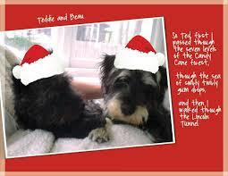 dog christmas card sayings christmas lights decoration