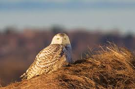 Massachusetts wildlife images Fund your land wildlife habitat conservation and the whip program jpg