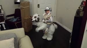 star wars costumes how clint case won halloween with a tauntaun riding luke skywalker