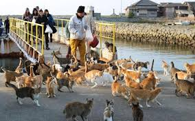 cat island tourists greeted by 1 000 of cats on cat island the matador