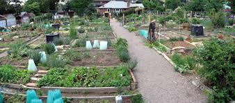 Pikes Peak Urban Gardens - colorado garden punch list no garden plot no problem