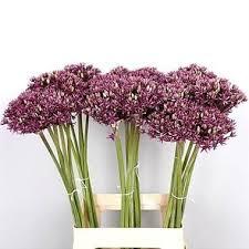 wholesale flowers miami allium miami wholesale flowers florist supplies uk