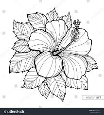 coloring pictures of hibiscus flowers appealing hawaii hibiscus flower leaf aloha stock vector pict for