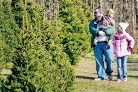 blount christmas tree farmers ready for buyers news