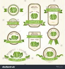 lettuce labels vegetables color package decorations stock vector