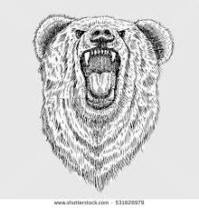 bear sketch stock images royalty free images u0026 vectors shutterstock